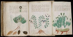 320px-Voynich_Manuscript_170
