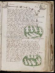 Voynich_Manuscript_141