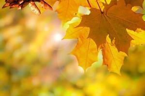 autumn-220110_640-300x198