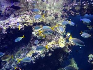 fish-278570_640-300x225