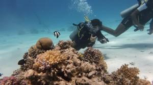 diving-285539_640-300x168
