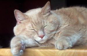 cat-17862_640-300x195