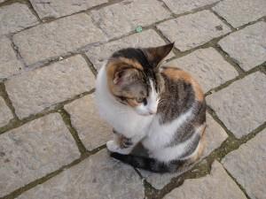cat-367872_640-300x225