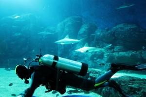 diver-216658_640-300x199